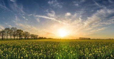 Bayern compra Monsanto
